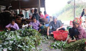 lá gai nguyên liệu chính làm nên đặc sản Nghệ An Bánh Gai Xứ Dừa