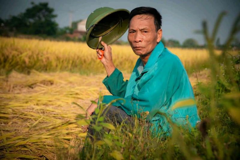 Lúa ngã máy gặt lúa không gặt