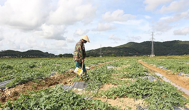 giải cứu nông sản Hà Tĩnh