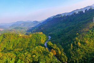 Khu rừng săng lẻ đẹp mê hồn ở Nghệ An