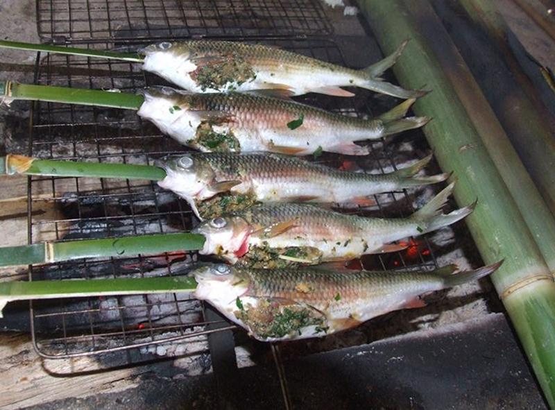 Cá mát đặc sản rừng Quốc gia Pù mát